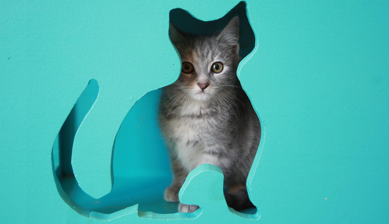 Coffee Cats Cat S Cradle